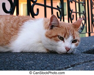 Red and white cat - Cat relaxing, colorful typical houses at...