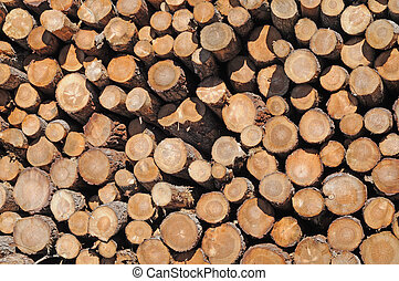Pile of pine tree-trunks, timber, nature background