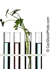 Flowers and plants in test tubes on white