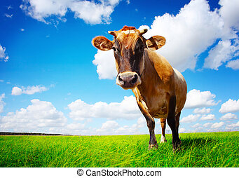 Cow - Brown cow standing on green meadow on cloudy sky...