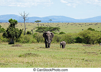 Elephants on the Masai Mara