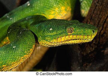 serpent, langue