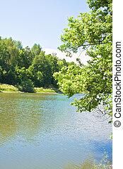 Forest at coast of pond (summer landscape)