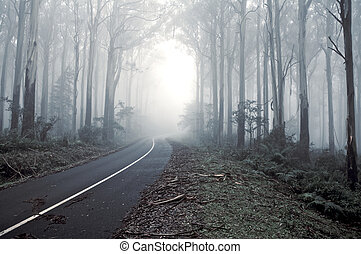 Misty drive thought the Forrest - A road leading into the...