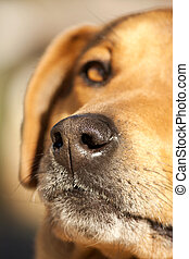 nose of domestic dog - close view of the nose of a domestic...