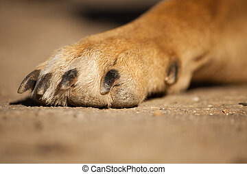 dirty paw of dog - Close view of a dirty paw of a domestic...