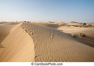 Sand Dunes Thar Desert - Cliche desert sand dunes in...