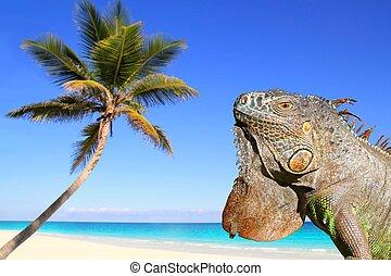 Mexican iguana in tropical Caribbean beach