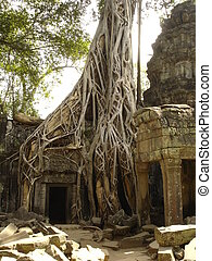 Banyan tree growing through ruins, Angkor Wat, Cambodia