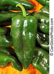 Poblano chili peppers chile Capsicum annuum