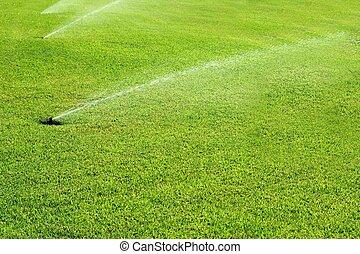 grass garden spring water in a row - grass garden spring...