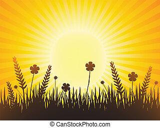 Poppy meadow with sunburst sky