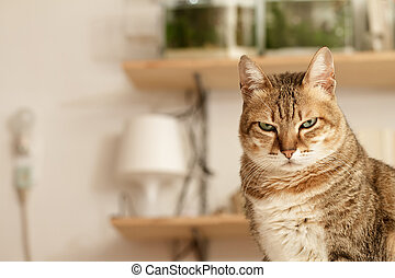 Angry cat with unhappy expression standing on desk in home.