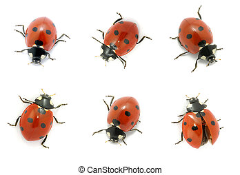 Ladybugs isolated on the white