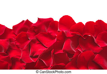 Petals of a rose, on a white background