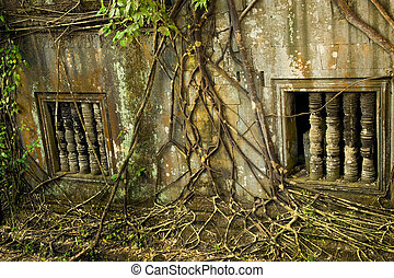 Entangling Roots - Part of an ancient buddhist temple...