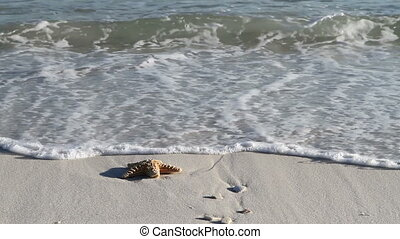Starfish In Surf - Starfish caught in the surf is swept away...