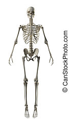 Full Frontal Skeleton