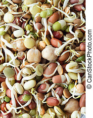 Organic Mixed Beansprouts - Close up of assorted organic...