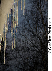 Icicles, sunlight and sky from the window.