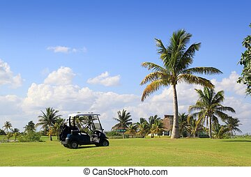golf course tropical palm trees in Mexico - golf course...