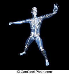 Anatomy - Martial Arts - A medical visualisation of human...