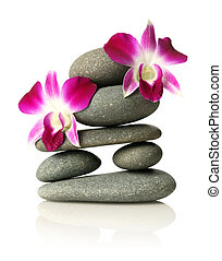 Orchids on stacked stones