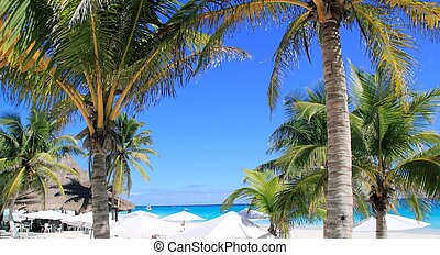 caribbean tropical beach white parasol coconut palm -...