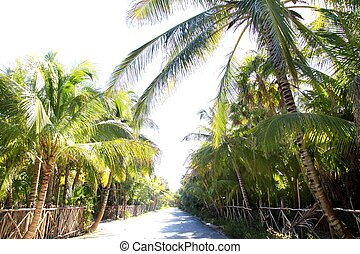 coconut palm trees track road tropical beach