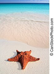 caribbean starfish tropical sand turquoise beach - beautiful...