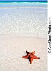 綠松石, 加勒比海,  starfish, 熱帶, 沙子, 海灘