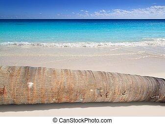 coco, árvore, turquesa, palma, tronco, praia, mentindo