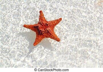 starfish orange in wavy shallow water - beautiful starfish...