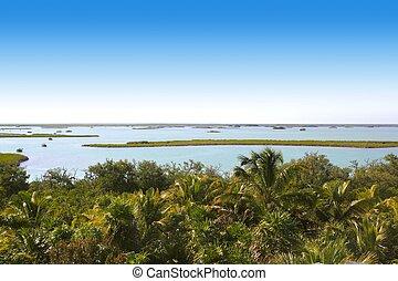 Mangrovenbaum, Handfläche, baum, dschungel, lagune