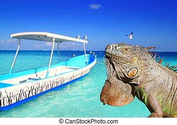 Mexican iguana in Caribbean tropical beach