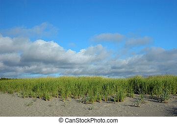 Sand dunes at Long Beach Peninsula