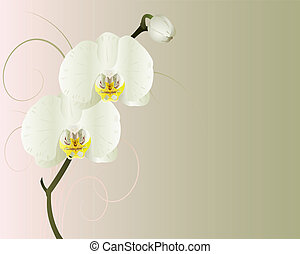 Orchids. - Vector orchids on a green and pink background.
