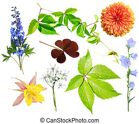 Collection of natural elements - Flower and vegetative...