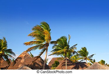 Mayan riviera tropical sunroof palm trees blue sky - Mayan...