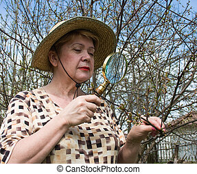 A woman inspects cherry branch in search of pests