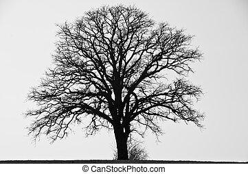 tree in wintertime