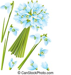 spring snowdrop flowers vector illustration isolated on...