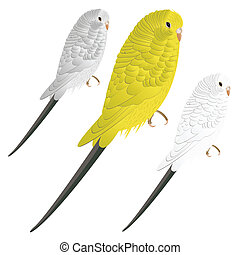 Budgie or parakeet - Cute vector budgie or parakeet