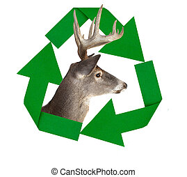 Recycle Symbol With whitetail Deer