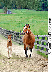 colt and mare running in paddock area