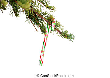 candy cane on a spruce tree branch