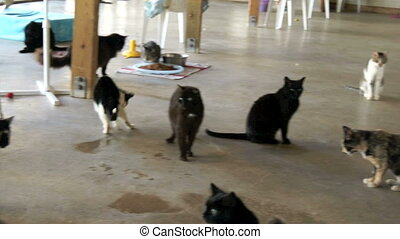 Cats at no kill animal shelter - Panning over a large room...