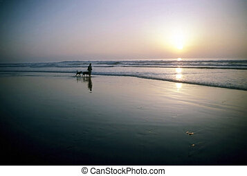 Man with dogs on beach at sunset