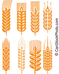 Wheat ears - Set of wheat ears in different styles