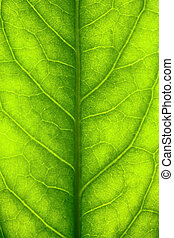 Green leaf close-up - Macro shot of a green leaf, shallow...